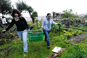 Ambiente. Cidadãos criam espaço para agricultura não convencional no centro do Porto