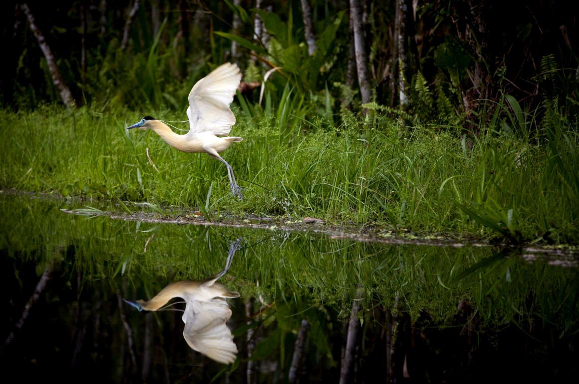Parque Nacional do Yasuni, no Equador: esta zona da bacia amazónica é das que tem mais biodiversidade no planeta